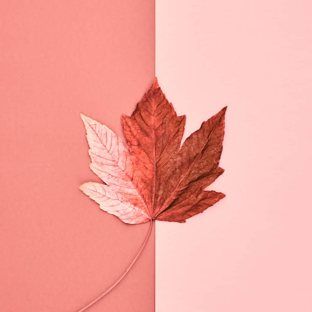 Adobe stock image of leaf in shades of coral
