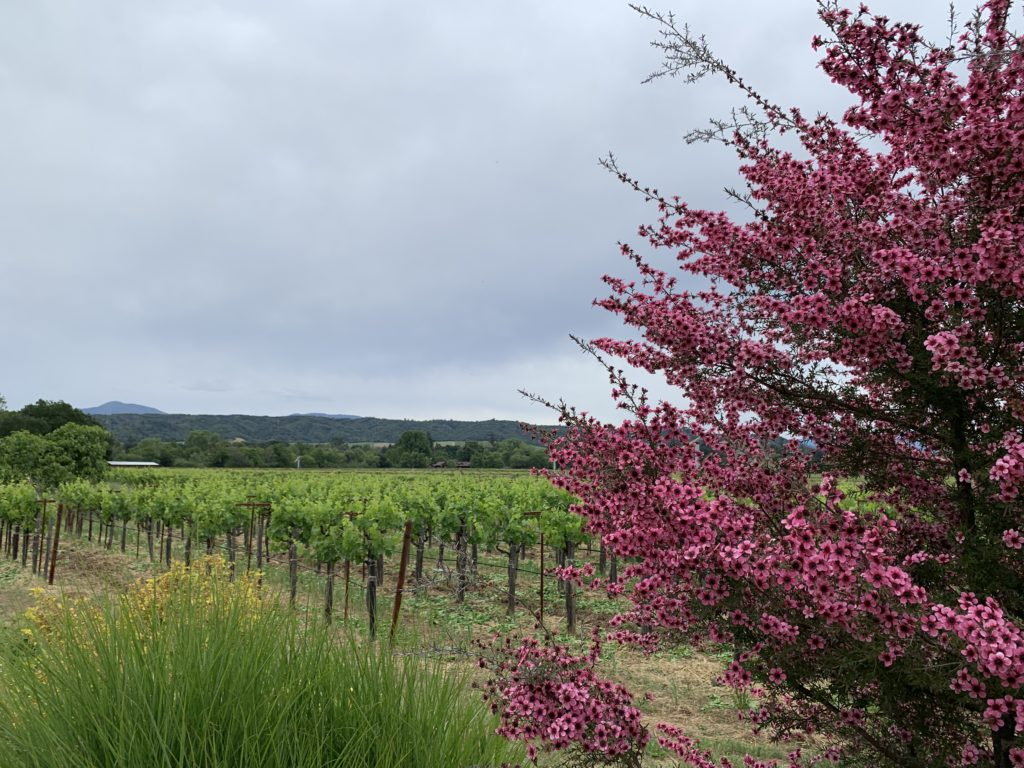 Quivira's Wine Creek Ranch is the coldest site in Dry Creek Valley; this is optimal for preserving acidity in the Sauvignon Blanc and Rhônes planted on the valley floor.