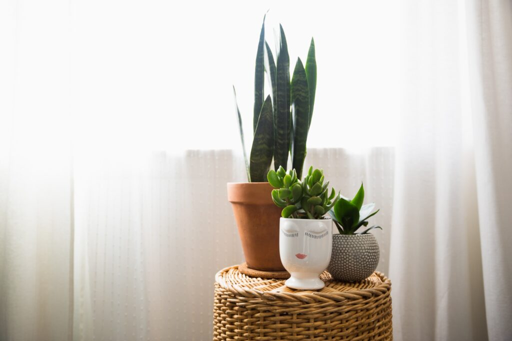 House plants by the window
